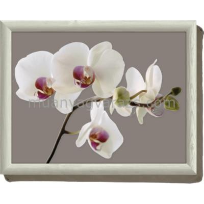 C.T.5140462 Öltálca 438x338mm, Orchid Harmony