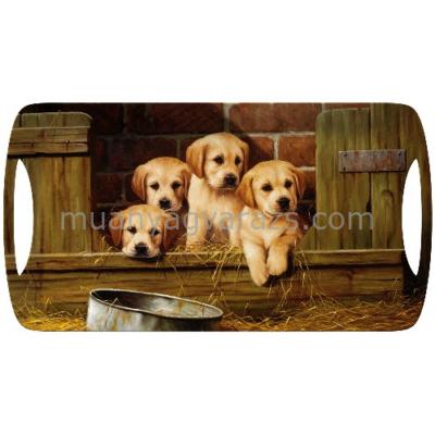 C.T.5187269 Műanyag szendvicstálca 385x200mm,Labrador Pups