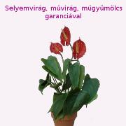Selyemvirág, műgyümölcs garanciával